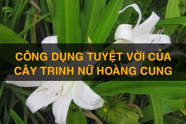 cong-dung-cay-trinh-nu-hoang-cung-1