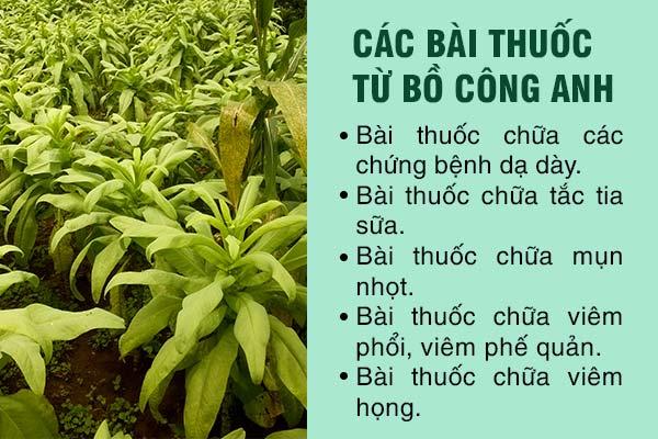 cong-dung-cua-cay-bo-cong-anh-3